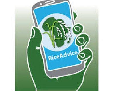 rice advice app